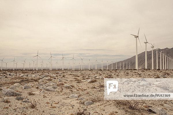 Reihen von Windkraftanlagen  Kalifornien  USA