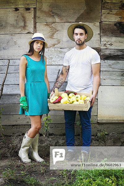 Gemüse ernten Garten jung Peperoni Glocke