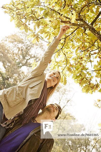 Baum Pflanzenblatt Pflanzenblätter Blatt Herbst jung aufheben