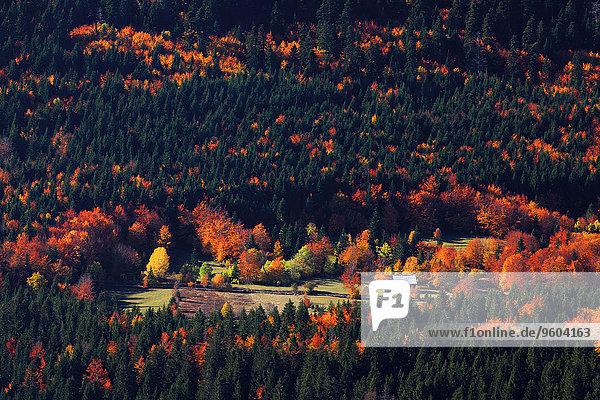 Farbaufnahme Farbe Bauernhof Hof Höfe Wald Herbst Luftbild Kroatien