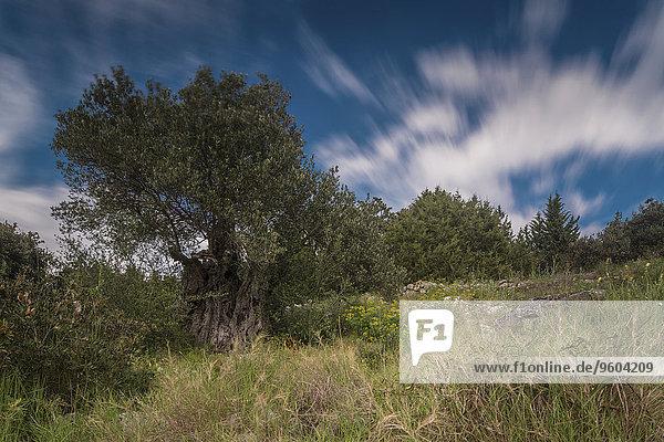 Wolke Landschaft ungestüm Bewegung Kroatien Dalmatien