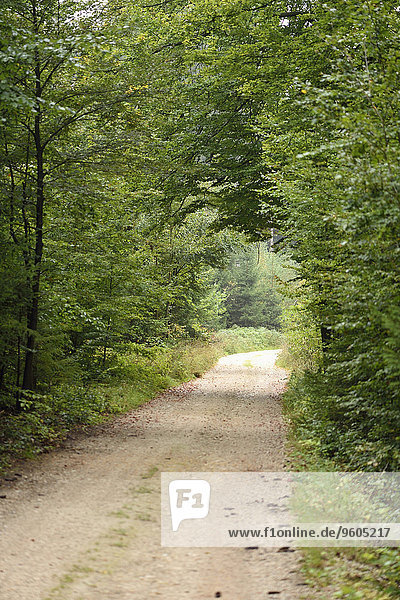 Scenic of a little road going through the forest in early autumn  Upper Palatinate  Bavaria  Germany