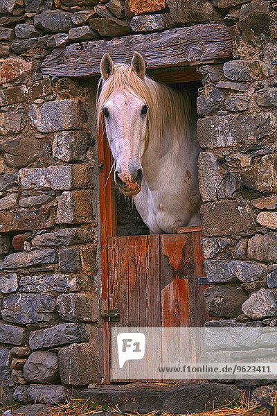 Spain  Province of Huesca  horse in stable