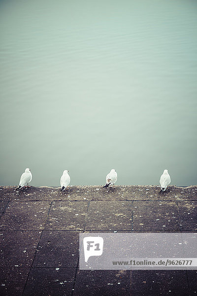 Reihe von vier Möwen vor dem Wasser Reihe von vier Möwen vor dem Wasser