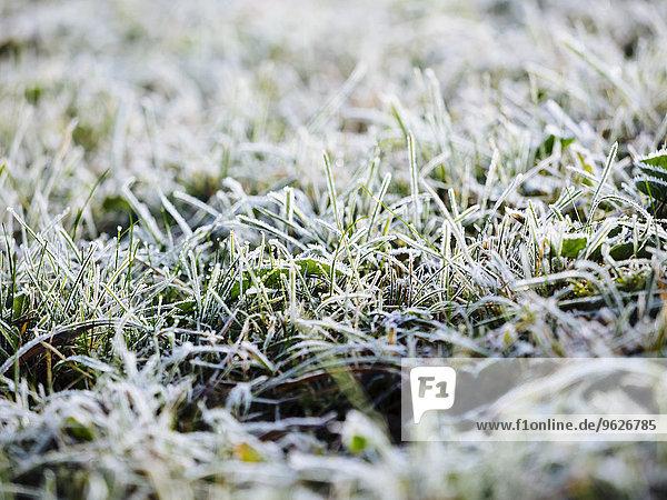 Deutschland  gefrorenes Gras im Winter