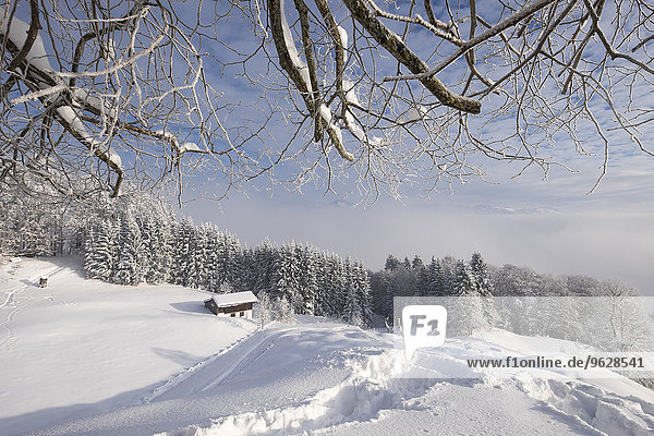 Deutschland  Bayern  Oberbayern  Mangfallgebirge  Hocheck bei Oberaudorf  Aussichtspunkt