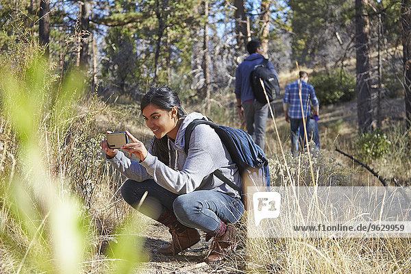 Junge Wanderin beim Fotografieren mit dem Smartphone im Wald  Los Angeles  Kalifornien  USA
