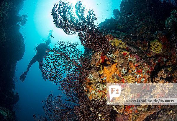 Taucher am Korallenriff.