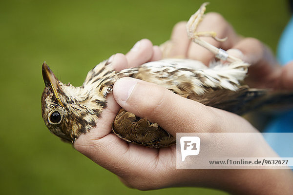 A girl holding a wild bird carefully in her hands.