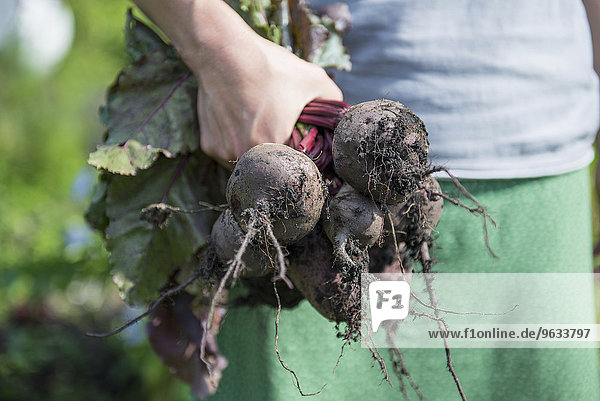 Garden beetroot woman hand holding earth