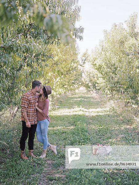 küssen Obstgarten Apfel
