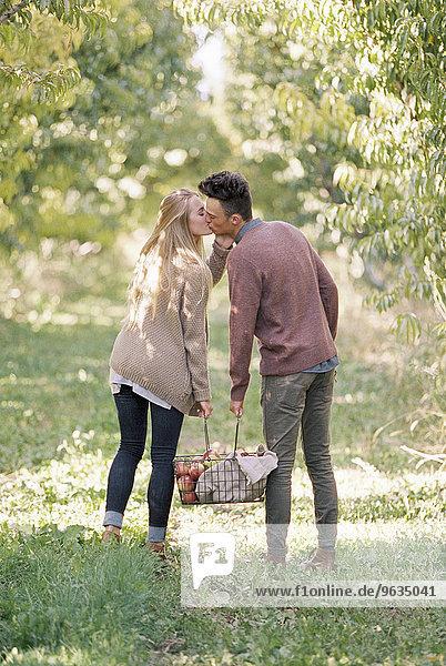 tragen Korb küssen Obstgarten Apfel
