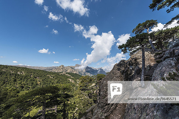 Ausblick über Kiefernwald  Col de Bavella  Bavella-Massiv  Korsika  Frankreich  Europa