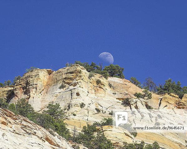 Aufgehender Mond und Checkerboard Mesa aus Navajo-Sandstein  Zion-Nationalpark  Springdale  Utah  USA  Nordamerika