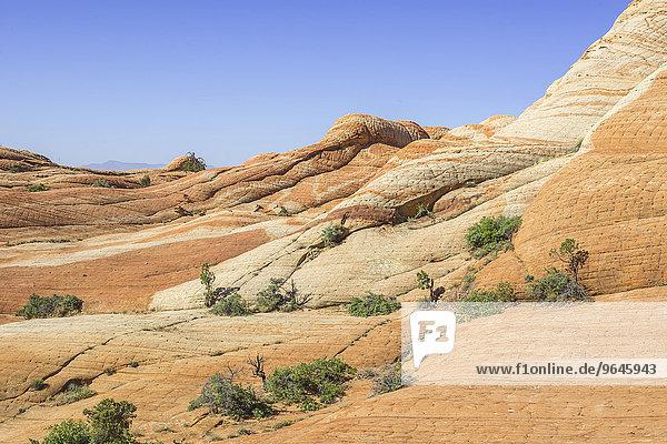 Felsformationen der Candy Cliffs  Washington  Utah  USA  Nordamerika