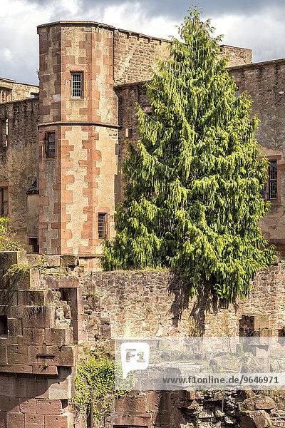 Das Heidelberger Schloss  Heidelberg  Baden-Würtemberg  Deutschland  Europa