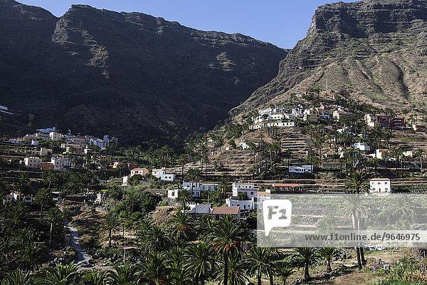 Kanarische Dattelpalmen (Phoenix canariensis)  Terrassenfelder  Häuser  Lomo del Balo  Valle Gran Rey  La Gomera  Kanarische Inseln  Spanien  Europa