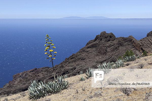 Agaven (Agave) an einem Hang  hinten der Atlantik und die Insel La Palma  bei Arure  La Gomera  Kanarische Inseln  Spanien  Europa