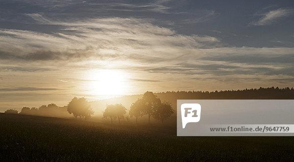 Sonnenuntergang im Erntestaub  Schwäbische Alb  Baden-Württemberg  Deutschland  Europa