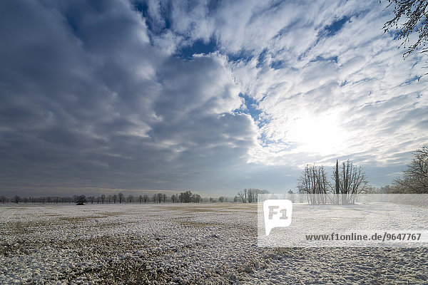 Winter landscape  Mönchbruch nature reserve  Mönchwiesen  Mörfelden-Walldorf  Hesse  Germany  Europe