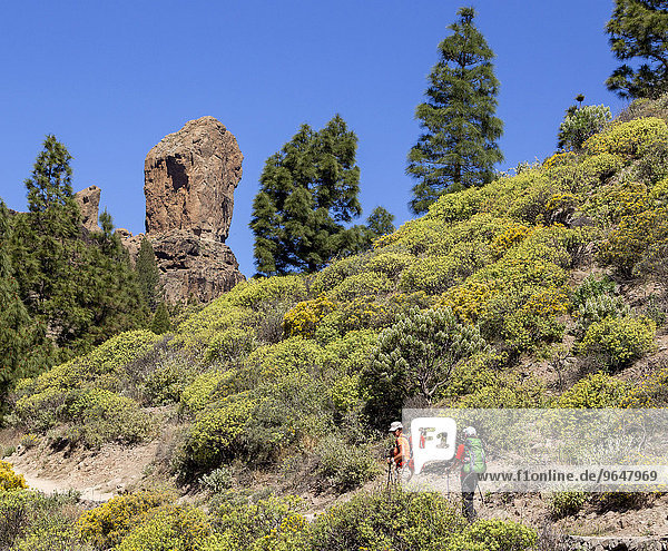 Hikers on the way to Roque Nublo rock  Gran Canaria  Canary Islands  Spain  Europe