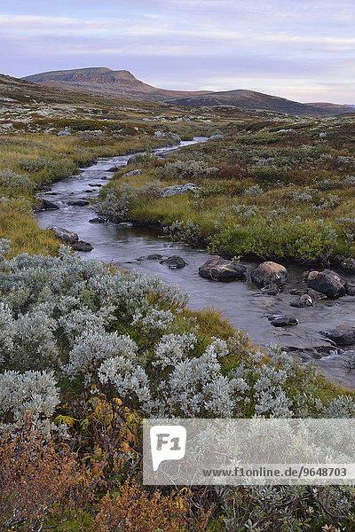 Gebirgsbach in Fjelllandschaft im Herbst  Ringebufjellet  Norwegen  Europa