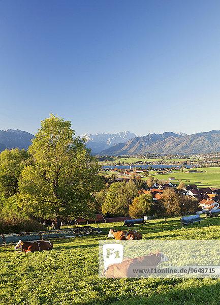Ausblick von der Aidlinger Höhe über den Riedsee zum Wettersteingebirge  Oberbayern  Bayern  Deutschland  Europa