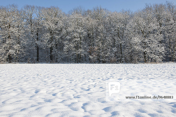 Snow-covered trees and a snow-coverd meadow  Thuringia  Germany  Europe