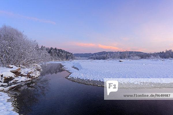 Wintermorgen in den Isarauen  bei Geretsried  Isar  Oberbayern  Bayern  Deutschland  Europa
