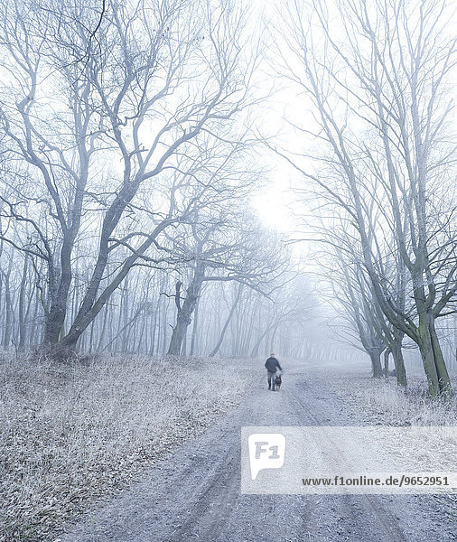 Trail through deciduous forest in winter fog and frost,  near Freyburg,  Saxony-Anhalt,  Germany,  Europe