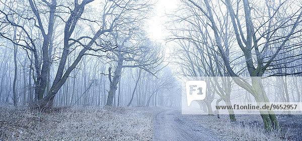 Wanderweg durch Laubwald im Winter bei Nebel und Frost  bei Freyburg  Sachsen-Anhalt  Deutschland  Europa