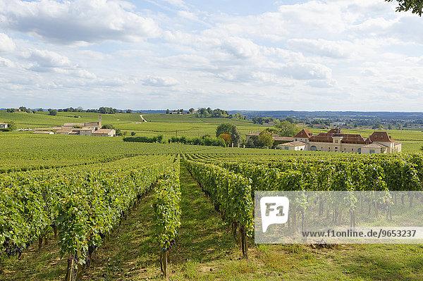Bordeaux Weinberg und Chateau Angelus  Saint-Émilion  Département Gironde  Aquitanien  Frankreich  Europa