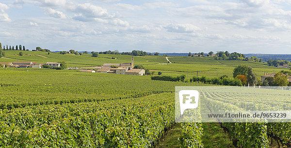 Weingut  Saint-Martin de Mazerat  Département Gironde  Aquitanien  Frankreich  Europa