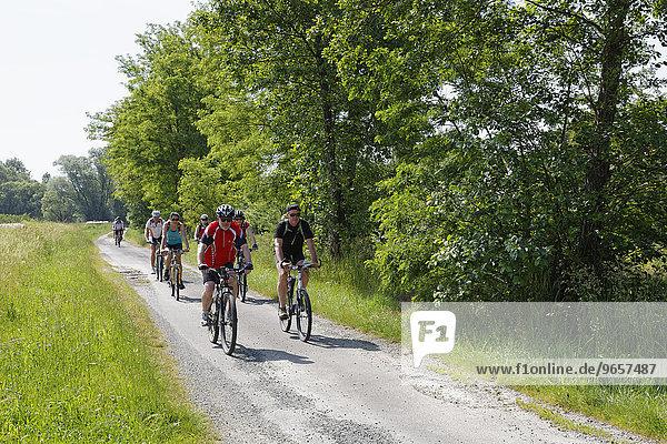 Radfahrer am Lafnitztal-Radweg  Heiligenkreuz im Lafnitztal  Südburgenland  Burgenland  Österreich  Europa