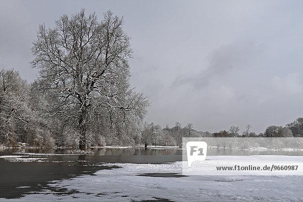 Winter floods on the floodplains of the Elbe river  Middle Elbe Biosphere Reserve  near Dessau-Rosslau  Saxony-Anhalt  Germany  Europe