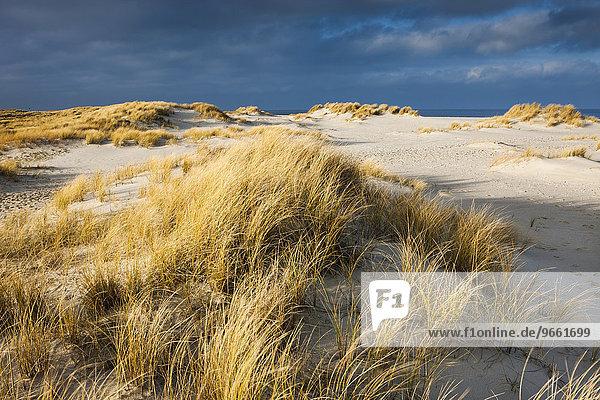 Dunes  Ellenbogen  Sylt  North Frisia  Schleswig-Holstein  Germany  Europe