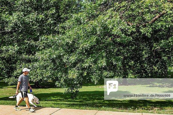 Mann gehen Baum Rasen Hund Geschichte Nachbarschaft Leine Ortsteil Missouri
