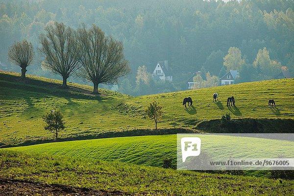 nahe Morgen Landschaft früh Polen