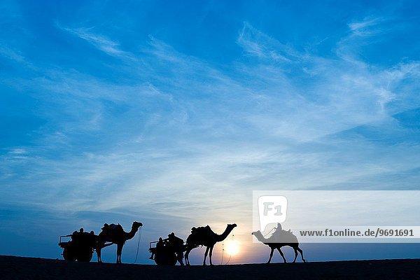 India  Rajasthan  Jaisalmer  Camel Ride  sunset.