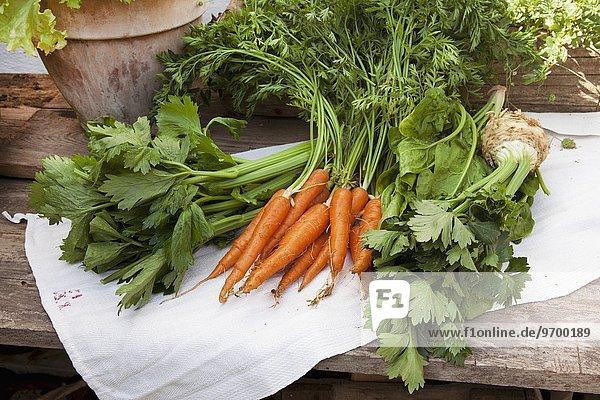 Verschiedenes Bio-Gemüse auf Leinentuch auf Holztisch: Staudensellerie  Möhren mit Grün  Spinat und Sellerieknolle mit Grün