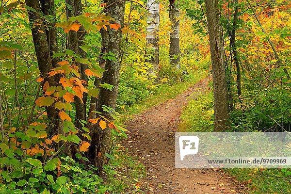 Caribou Falls Trail  Caribou Falls State Wayside  Minnesota.