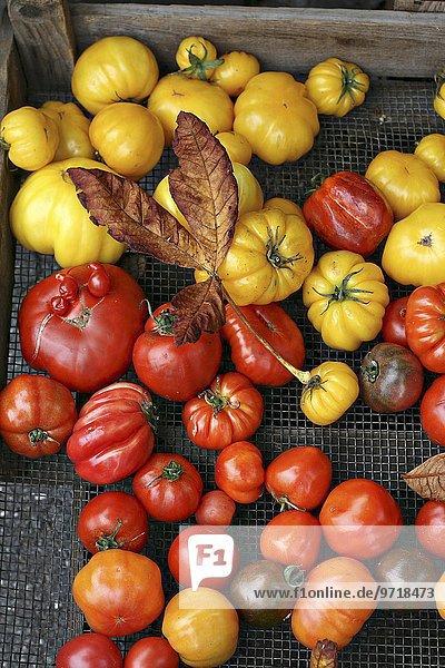 Tomaten verschiedener Farben und Formen in Obstkiste auf dem Markt
