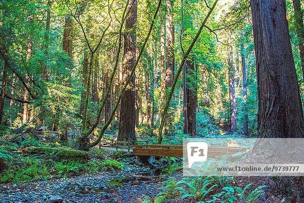 Northern California´s Muir Woods offers wonderful woodland walks among beautiful sequoia trees.