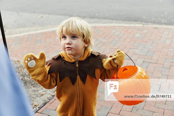 Löwe Panthera leo Europäer Junge - Person Kunststück Kostüm - Faschingskostüm Verkleidung Halloween