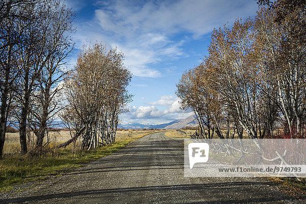 Trees near gravel road under blue sky