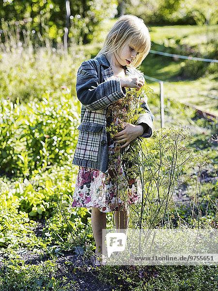 Blume Gemüse Fenchel Mädchen