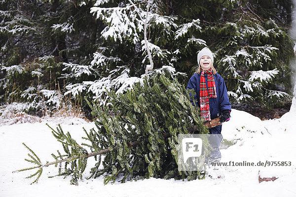 nahe Baum Wald Kiefer Pinus sylvestris Kiefern Föhren Pinie Mädchen