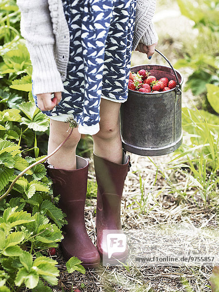 Eimer Erdbeere Mädchen