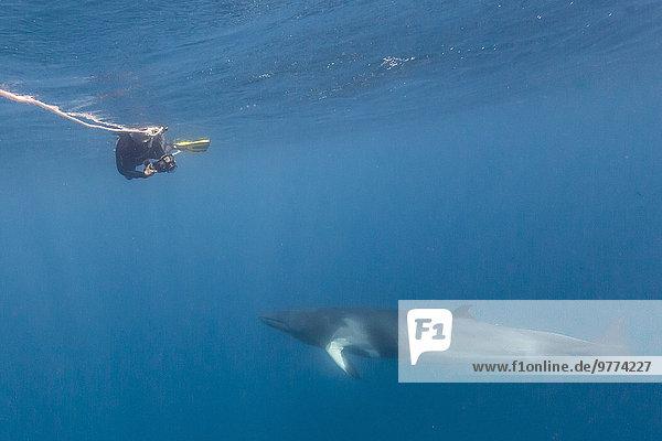 Pazifischer Ozean Pazifik Stiller Ozean Großer Ozean Großes Barriereriff great barrier reef Erwachsener Australien Queensland Wal