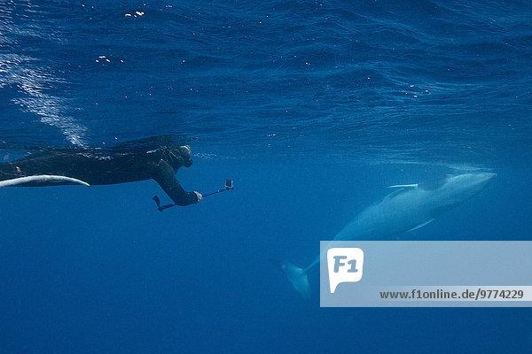 nahe Unterwasseraufnahme unter Wasser Band Bänder Pazifischer Ozean Pazifik Stiller Ozean Großer Ozean Großes Barriereriff great barrier reef schnorcheln 10 Erwachsener Australien Queensland Riff Schnorchler Wal